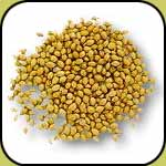 coriander supplier, wholesale spices from india, kodri seeds
