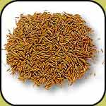 cumin seeds exporter, spices from india, indian masala exporters